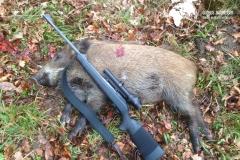 Drivjagt-gris