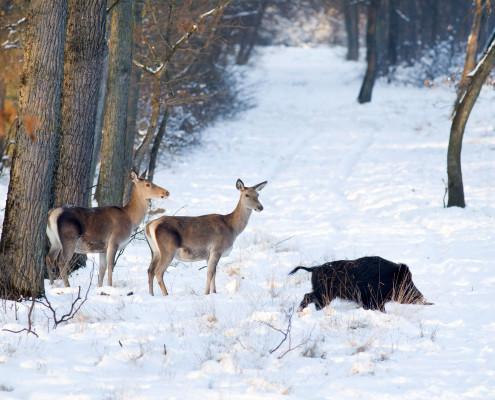 Jagt Polen Globus Jagtrejser