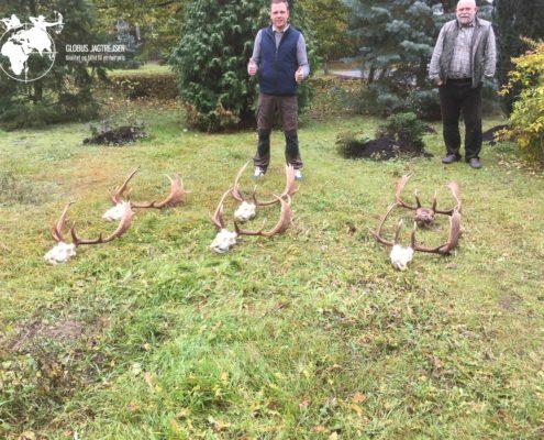 Dåhjort Polen Globus Jagtrejser