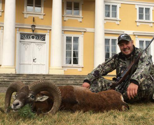 Muflonjagt Polen Globus Jagtrejser