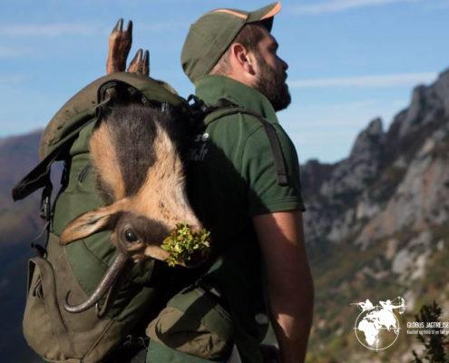 Gemsejagt Frankrig Globus Jagtrejser