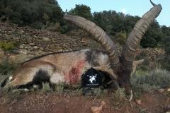 Jagt Spanien Globus Jagtrejser