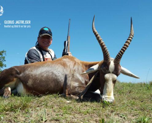 Jagt Sydafrika